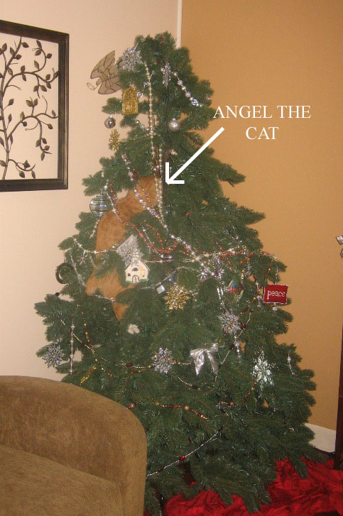 Angel the cat is caught in the act!